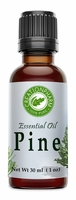 Pine Essential Oil 30ml (1oz)