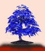 20 pcs Purple Blue Japanese Tree Bonsai Flower