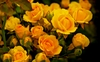 50 Golden Yellow rose flower seeds  Ships Free