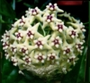 Cactus Seeds 50 fresh succulent Flower Seeds Ships FREE