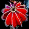 Cactus 50 succulent Flower Seeds Ship Free