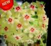 Cactus 50 fresh succulent Flower Seeds Ships FREE