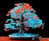 20  Azure Blue and Red Bonsai Tree Seeds Ships FREE