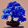 20  Maple Blue Bonsai Tree Seeds