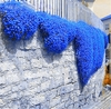 Rock Blue cress Climbing plant 100 Seeds Ships FREE