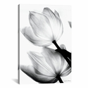 Translucent Tulips II by Debra Van Swearingen Gallery Wrapped Canvas Artwork with Floating Frame - 19''W x 27''H x 1.5''D [WAC3266-1PC6-26X18-FF01-ICAN]