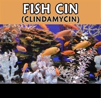 Fish Cin (clindamycin)  150mg  30 capsules