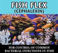 Fish Flex (cephalexin)  - 500mg  30 capsules