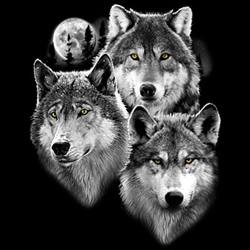 Animal Wildlife T-Shirts - Wolf T Shirts Wholesale - MSC Distributors