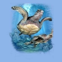 Wholesale Fashion T-Shirts - 2 Sea Turtles T-Shirts - 21246