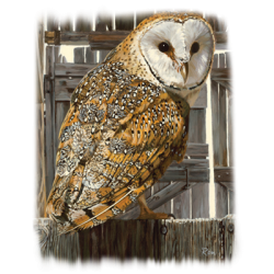 Owl Wildlife Fashion Design T-Shirts & Shirt Designs, Custom T-Shirts, Wholesale Bulk T Shirts Cheap - 21759HL2