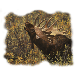 Graphic Wholesale Clothing and Apparel Drop Shipping - Moose T Shirts - 21762HL2