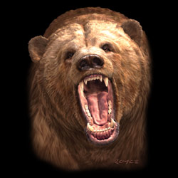 MSC Distributors : Shop Grizzly Bear T-Shirts Online Bulk