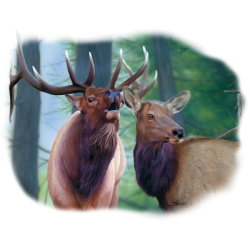 Wholesale Clothing, Country Elk Wildlife T Shirts Hats Wholesale Bulk Supplier - 21750HL2