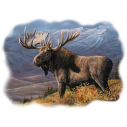 Wholesale Clothing, Country Moose Maine Hunting T Shirts Hats Wholesale Bulk Supplier - 21757HL2