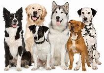 Heat Transfers Wholesale Bulk Dog Pet Mix - MSC Distributors