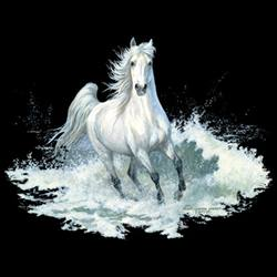 White Horse T-Shirts - MSC Distributors