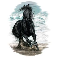 Wholesale Black Horse T-Shirts - MSC Distributors