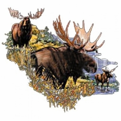 Moose Wildlife Animal T Shirts Hats Wholesale Bulk Supplier Clothing Apparel - A12232A
