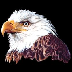 Wholesale Bulk Suppliers Resellers Products - T Shirts Gildan Bald Eagle and American Flag T Shirts - MSC Distributors