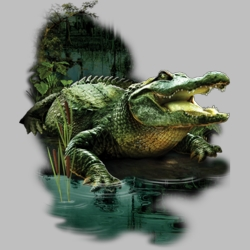 Wholesale Clothing, Florida Alligator Swamp T Shirts Wholesale Bulk Graphic Printed Suppliers - 18684D6