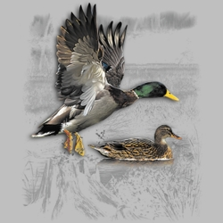 MSC Distributors : Shop Duck T-Shirts Online Bulk