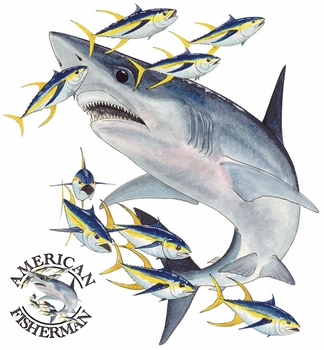 Bull Shark T Shirts Designs, Apparel, Wholesale, Bulk, Supplier - MSC Distributors