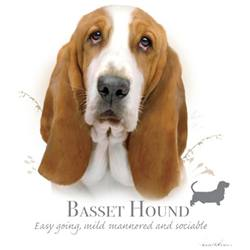 Wholesale BASSET HOUND T-Shirts in Bulk, Wholesale Clothing and Apparel