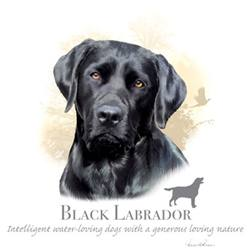 Wholesale Apparel Bulk Cheap Discount BLACK LABRADOR T Shirts, Clothing - 17398HL4-2T