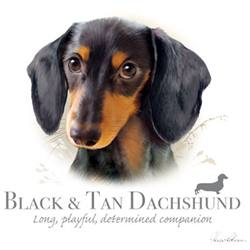 Wholesale Apparel Bulk Cheap Discount BLACK TAN SHORTHAIR Dashund T Shirts, Clothing- 17399HL4-2T