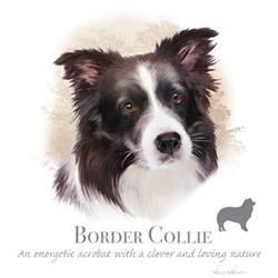 Wholesale Pet Lovers Dog Best T-Shirts Suppliers - BORDER COLLIE 17400HL4-2T