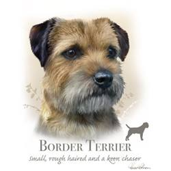 Wholesale Pet Lovers T-Shirts Suppliers - BORDER TERRIER 17477HL4-2T