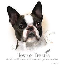 Wholesale Pet Lovers Dog Best Bulk Cheap T-Shirts Suppliers - BOSTON TERRIER 17401HL4-2T