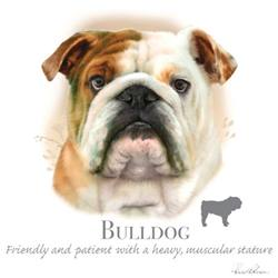 Wholesale Pet Lovers T-Shirts Suppliers - BULLDOG 17402HL4-2T