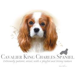 Wholesale Pet Lovers T-Shirts Suppliers - CAVALIER KING CHARLES SPANIEL 17489HL4-2T
