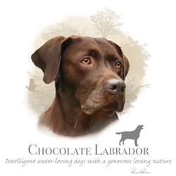 Wholesale Pet Lovers Dog Best T-Shirts Suppliers - CHOCOLATE LABRADOR 17403HL4-2T