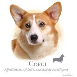 Wholesale Pet Lovers Dog Best T-Shirts Suppliers - CORGI 17405HL4-2T