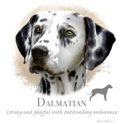 Wholesale Pet Lovers Dog Best T-Shirts Suppliers - DALMATIAN 17484HL4-2T
