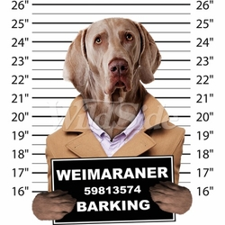 Wholesale Weimaraner T Shirts Online at Cheap Price, Discount Weimaraner T Shirts - 19213