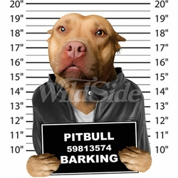 Pitbull T Shirts Designs, Apparel, Wholesale, Bulk, Supplier - MSC Distributors