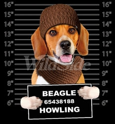 Wholesale Beagle T Shirts Online at Cheap Price, Discount Beagle T Shirts - 19175