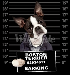 Wholesale Boston Terrier T Shirts Online at Cheap Price, Discount Boston Terrier T Shirts - 19176