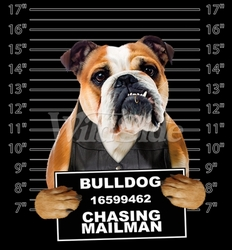 Wholesale Bulldog T Shirts Online at Cheap Price, Discount Bulldog T Shirts - 19178 Bulldog