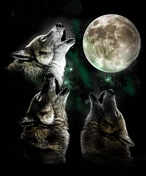 MSC Distributors : Shop 3 Wolf Moon T-Shirts Online Bulk