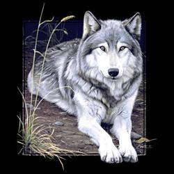 Timber Western Grey Wolf  T Shirts Clothing Wholesale - MSC Distributors