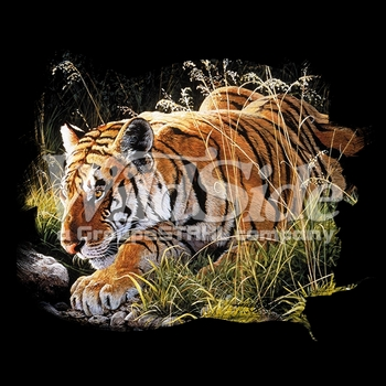 Wildlife T-Shirts, Wholesale Animal T-Shirts, Bulk, Suppliers - 18723