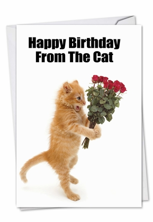 Hysterical Birthday Card From NobleWorksInc.com - Birthday From The Cat