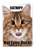 Hysterical Birthday Card From NobleWorksInc.com - Catnip Not Even Once