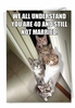 Hysterical Birthday Card From NobleWorksInc.com - Cats for Singles