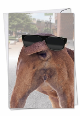 Humorous Birthday Card From NobleWorksInc.com - Funny Dog Face